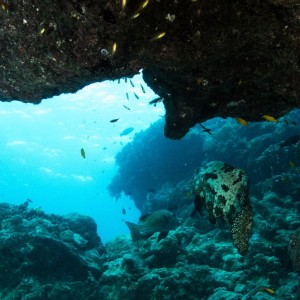 liveaboard Australia's Great Barrier Reef