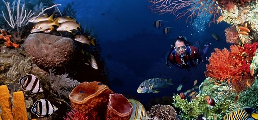 Scuba dive with Cairns dive tours