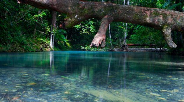 Crystal Clear Daintree River